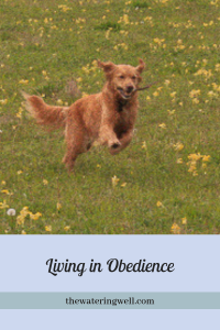 living-in-obedience-to god